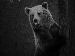 Karhutarinoita
