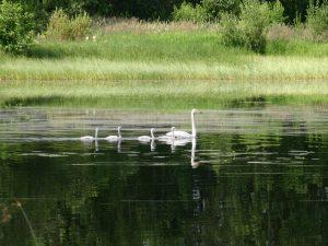 Itä-Suomen luonto