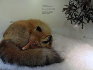 Eläinten talvehtiminen