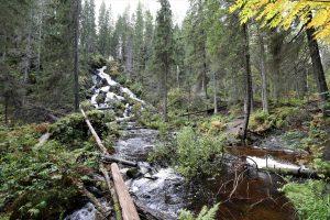 Kuvassa kivikkoinen vesiputous metsän keskellä.